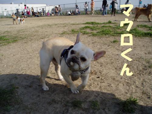 010_convert_20110506225807.jpg