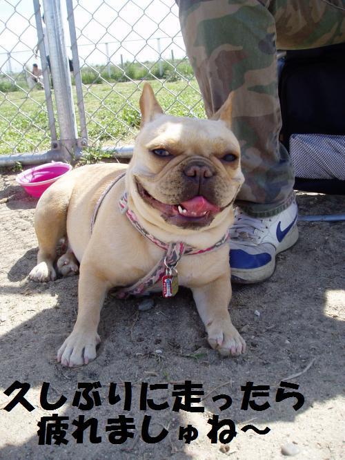 010_convert_20110508041304.jpg