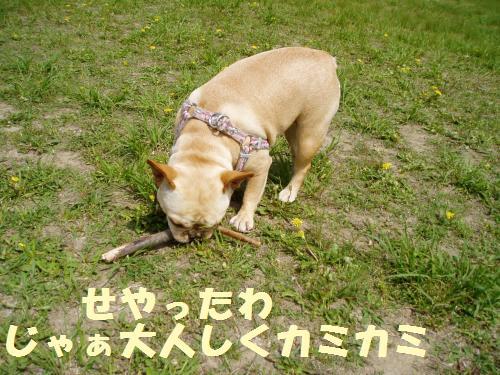 010_convert_20110510003526.jpg