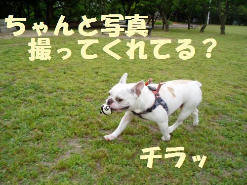 010_convert_20110512014651.jpg