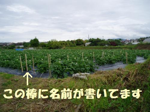 010_convert_20110512235302.jpg