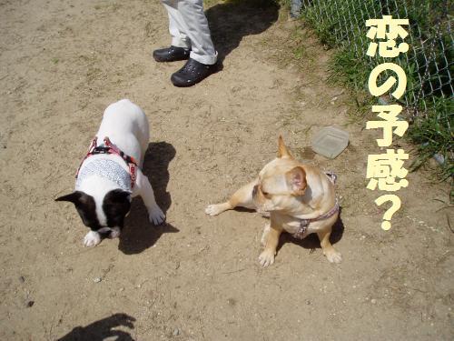 010_convert_20110516005910.jpg