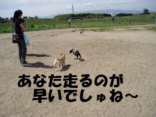 011_convert_20110508041330.jpg