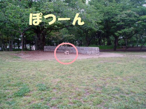 011_convert_20110512014730.jpg
