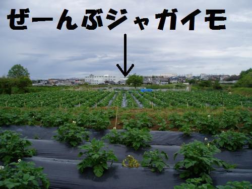 011_convert_20110512235346.jpg