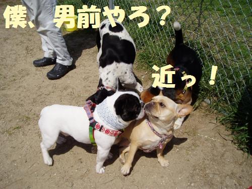 011_convert_20110516005941.jpg