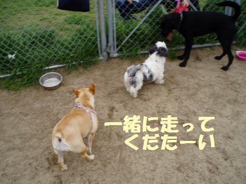 012_convert_20110501032220.jpg