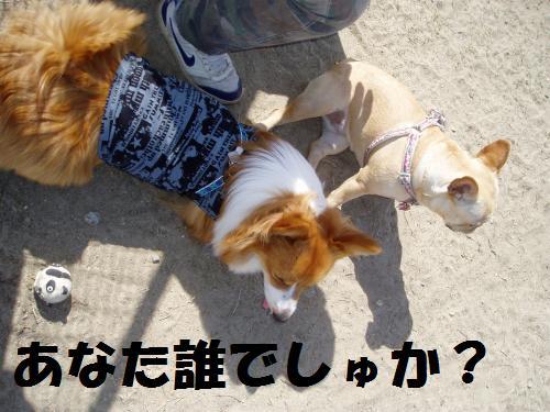 012_convert_20110508041401.jpg