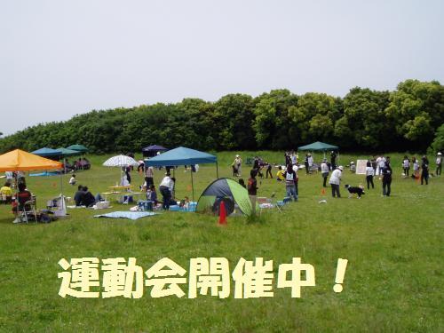 012_convert_20110516010013.jpg