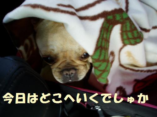 013_convert_20110506225928.jpg