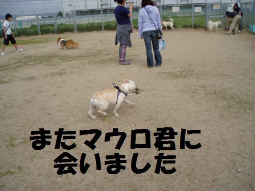 013_convert_20110508041427.jpg