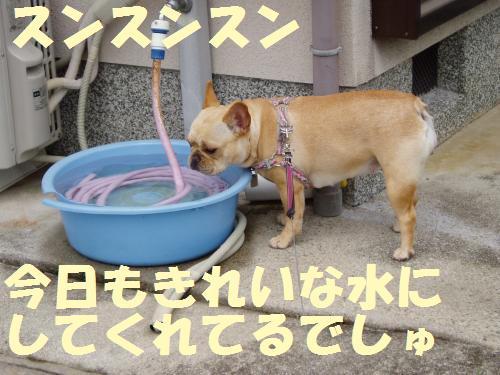 013_convert_20110512235508.jpg