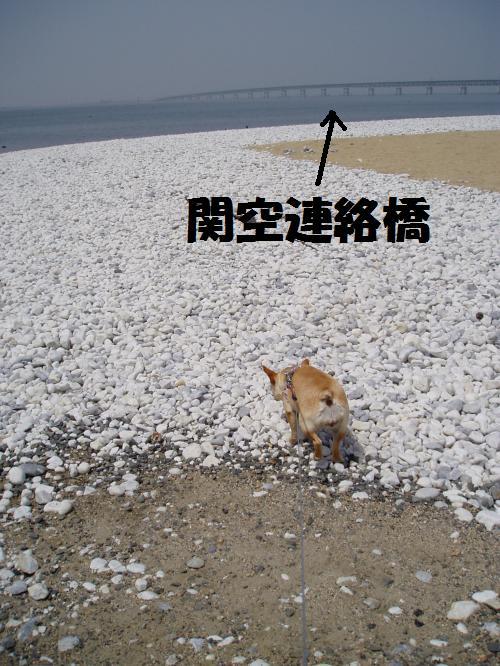 014_convert_20110505000658.jpg