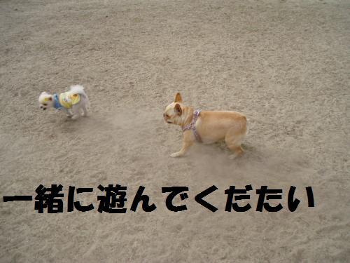 014_convert_20110508041452.jpg