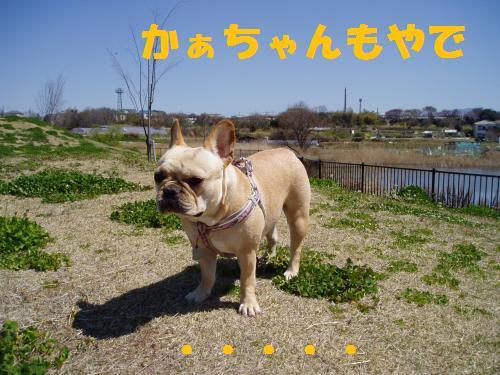 015_convert_20110405005947.jpg