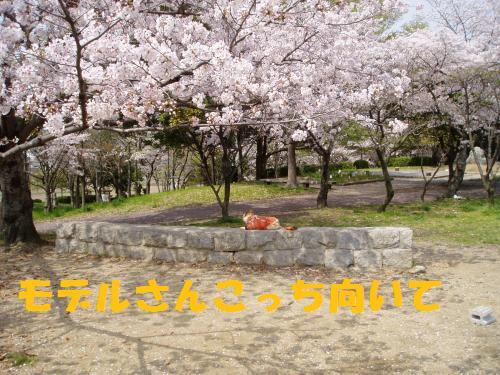 015_convert_20110413013324.jpg