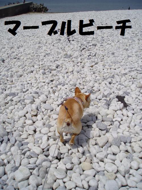 015_convert_20110505000815.jpg