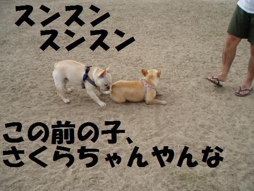 015_convert_20110508041516.jpg