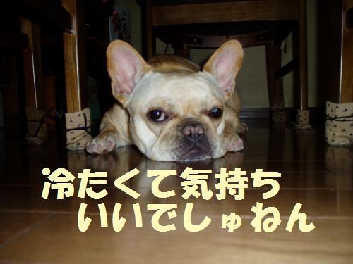 015_convert_20110512235614.jpg