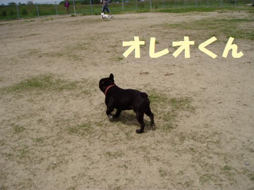 016_convert_20110516010219.jpg