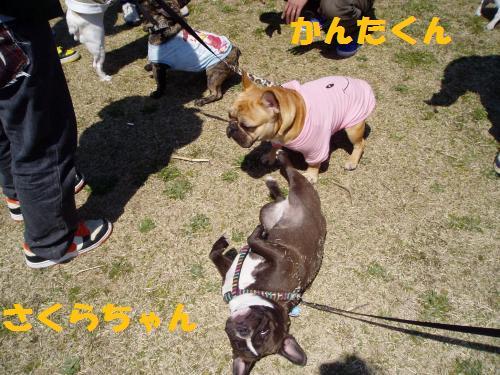 018_convert_20110328012113.jpg