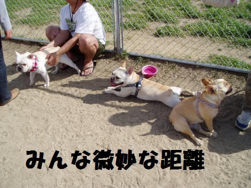 019_convert_20110508041703.jpg