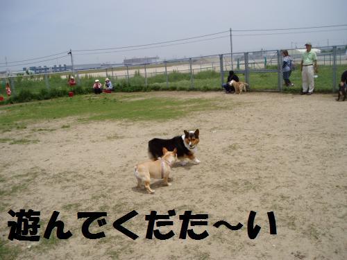 020_convert_20110516010414.jpg