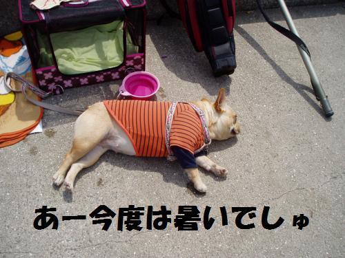 022_convert_20110506230200.jpg