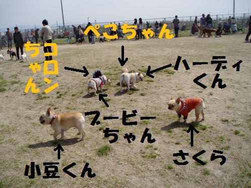 024_convert_20110418004720.jpg