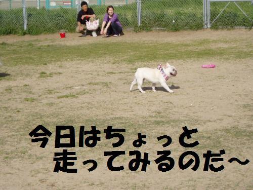024_convert_20110508041855.jpg