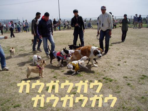 025_convert_20110418004759.jpg