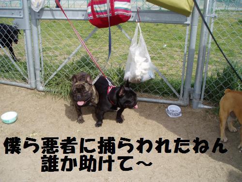 032_convert_20110418005232.jpg