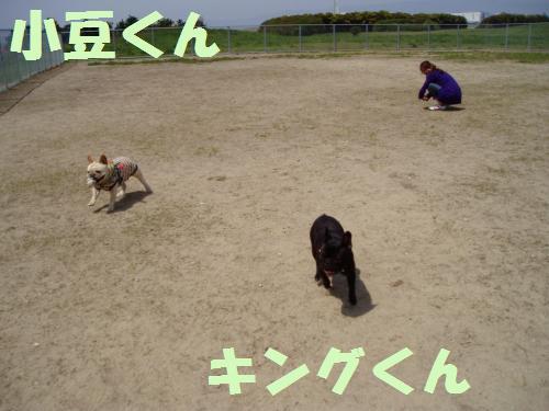 033_convert_20110422021648.jpg