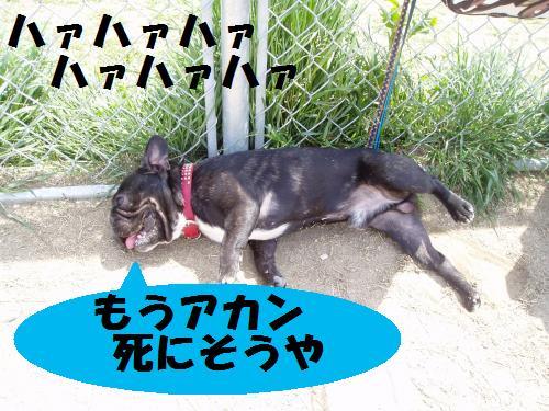 035_convert_20110422021745.jpg