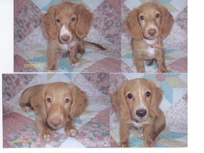 20080415 004仔犬