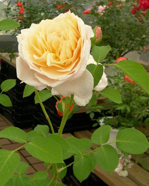 花のプレゼント1
