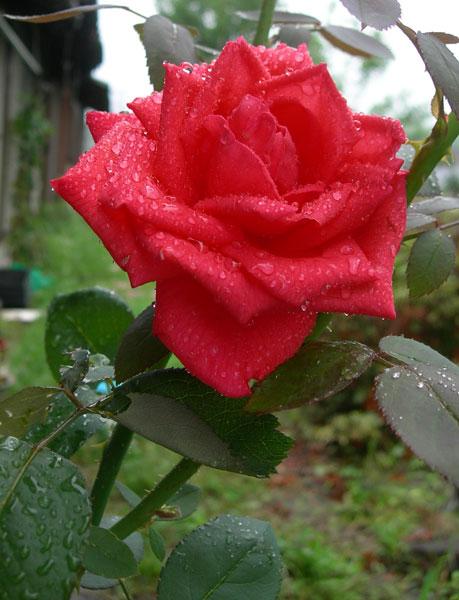花のプレゼント2