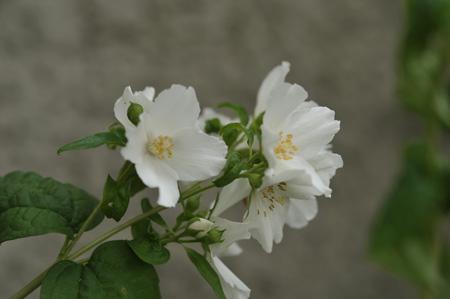 baikautsugi2011605.jpg