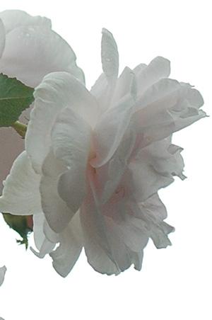carriere2011618-4.jpg