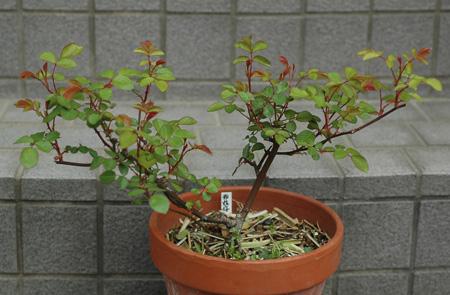 china2011420.jpg