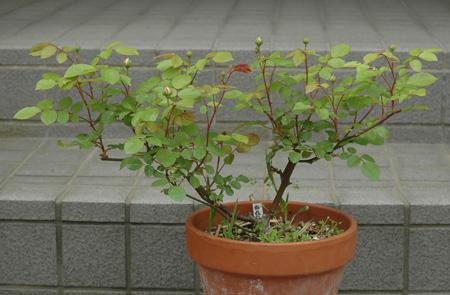 china2011503.jpg