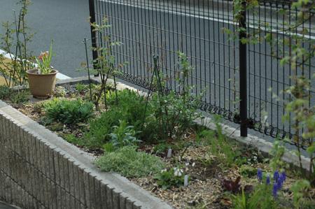garden2011411-1.jpg