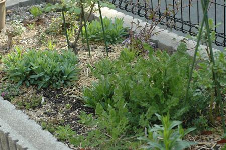 garden2011411-2.jpg