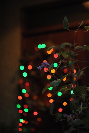 illumination20111129.jpg