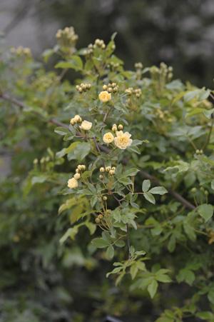 kimokkou2011427-3.jpg