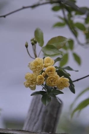 kimokkou2011428-1.jpg
