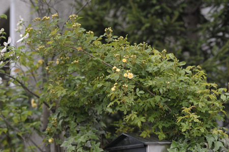 kimokkou2011428-2.jpg