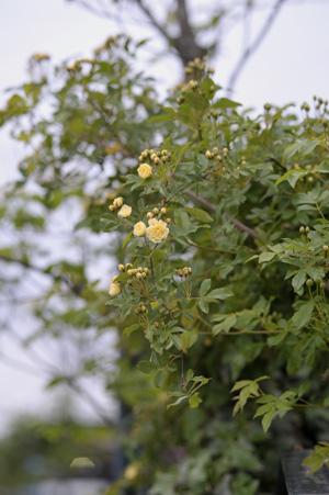 kimokkou2011428-4.jpg