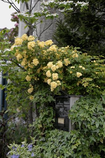 kimokkou2011504-2.jpg
