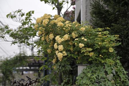 kimokkou2011504-3a.jpg
